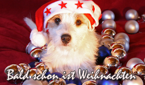 Adventsgrüße, Adventskarten, Grußkarten Advent E-Cards, Versende Grusskarte 176